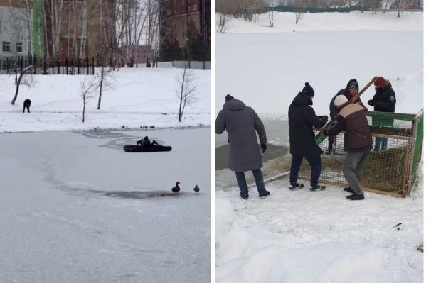 Сейчас специалисты зоопарка установили на озере ловушку