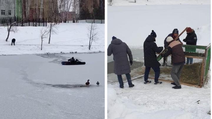 Депутат из Новосибирска на надувном матрасе пытался спасти застрявшую на озере утку