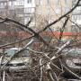 На Военведе дерево рухнуло на припаркованные машины. В одной из них находилась женщина