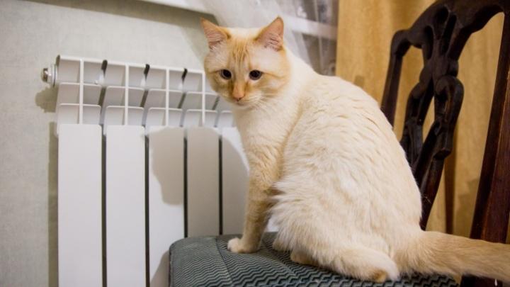 Когда отключат отопление в Ярославле: точная дата