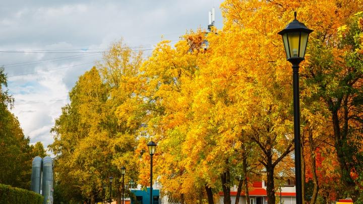 От +11 до -12: синоптики Кузбасса рассказали, чего ждать от погоды на неделе