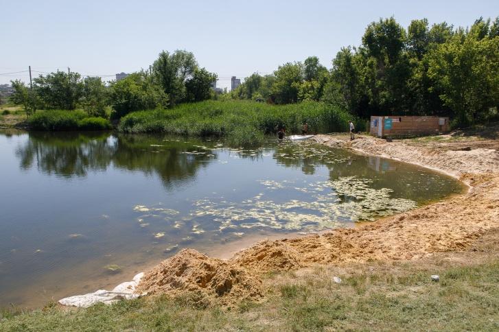 Берега пруда будут избавлять от камышей и укреплять деревьями