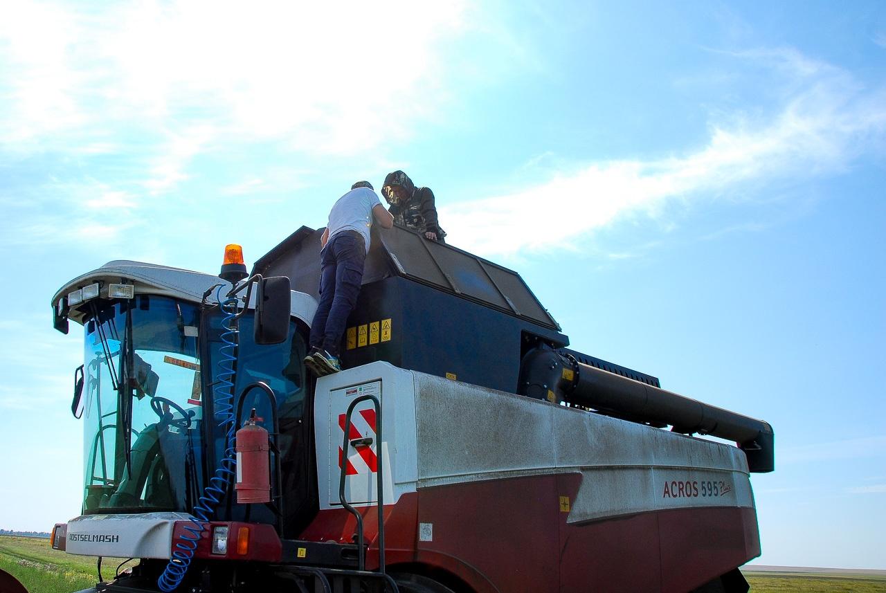 Денис и один из механизаторов оценивают качество льна в зерновом отсеке комбайна
