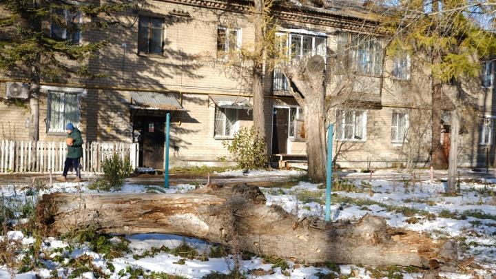 Падение дерева на школьницу в Челябинске переросло в уголовное дело о халатности