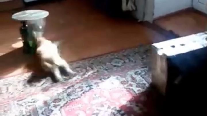 Пермяки сыграли в боулинг кошкой, объяснив это скукой в условиях самоизоляции