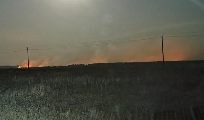 Сгорело всего три гектара: в Волгоградской области лесники отчитались о ликвидации лесного пожара в Урюпинске