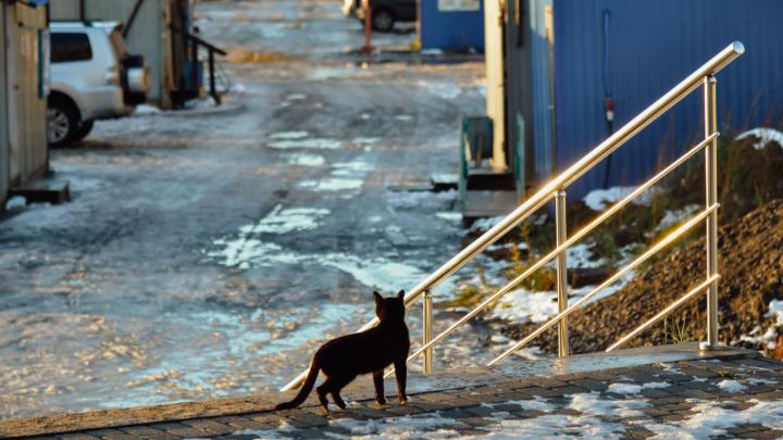 Солнце, лужи и даже мартовские коты: в Архангельск после снегопада пришла весенняя погода