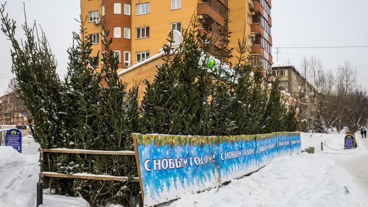 Мэрия Новосибирска назвала адреса елочных базаров — публикуем карту