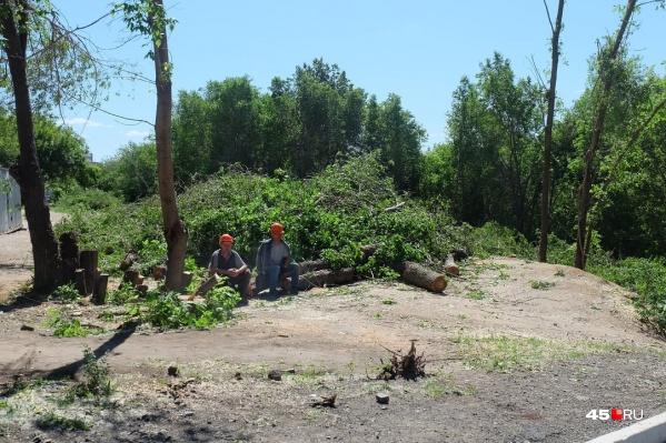 В ЦПКиО начали вырубать деревья