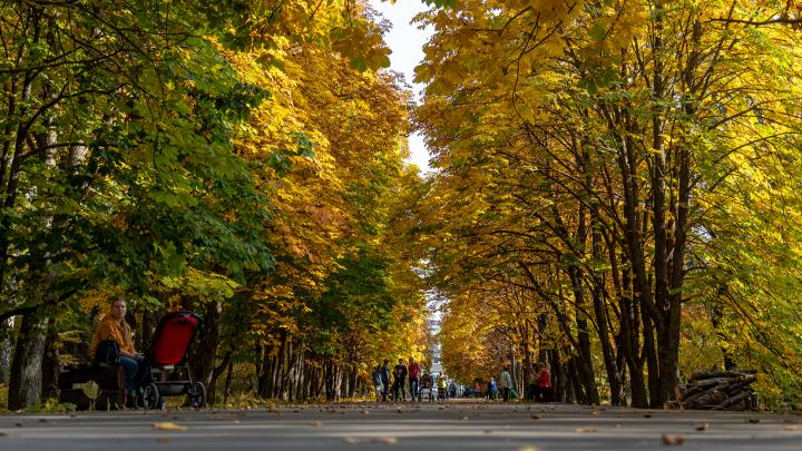 Золотая осень в Самаре: любуемся Ботаническим садом в красках октября