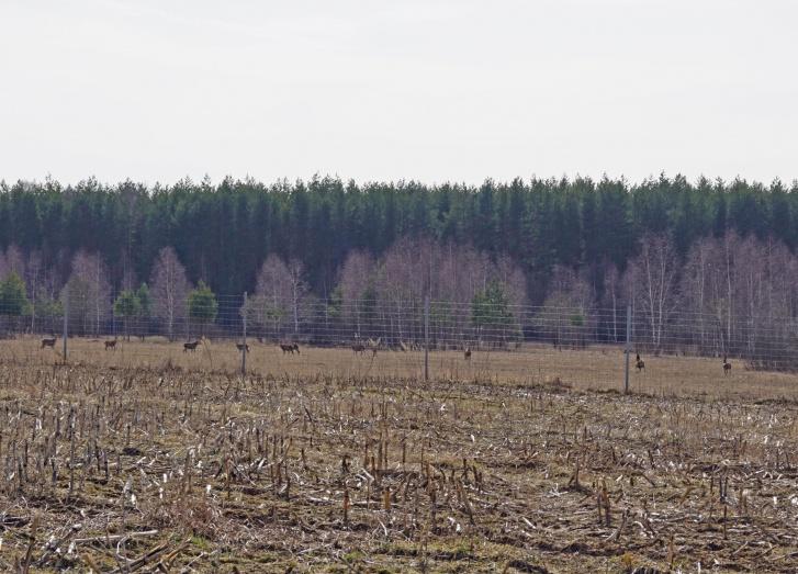 Наши соседи олени. Рядом с деревней — охотничье хозяйство