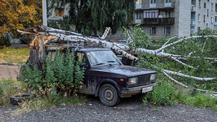Прямо на автомобили: в Ярославле ветром повалило деревья