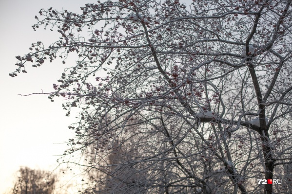 Скоро без теплых зимних пуховиков из дома выйти будет уже нельзя