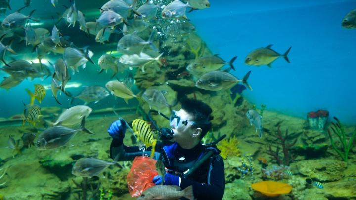 Лицом к лицу с акулой: гуляем по дну гигантского аквариума в океанариуме Екатеринбурга