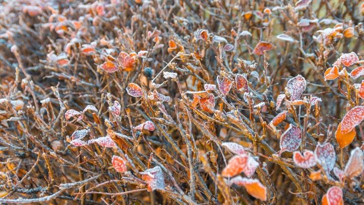В Самарской области объявили оранжевый уровень опасности из-за грядущих заморозков