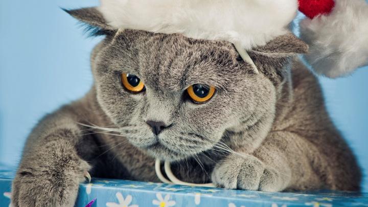 Разыскивается главная кошка Челябинска: на «Радио Дача» стартовал конкурс для усатых-полосатых