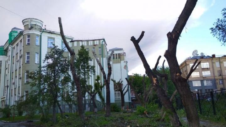В сквере возле университета водного транспорта срубили деревья. Мы выяснили, для чего (вы удивитесь)