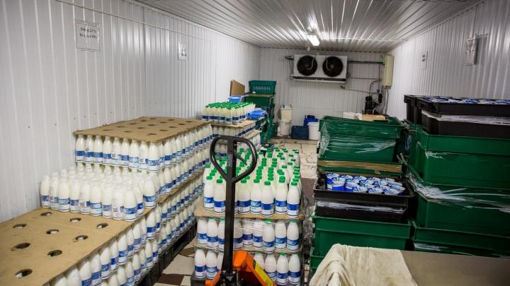 В Кузбассе 30% молочки оказались фальсификатом
