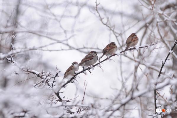 В понедельник в Екатеринбурге выпадет снег