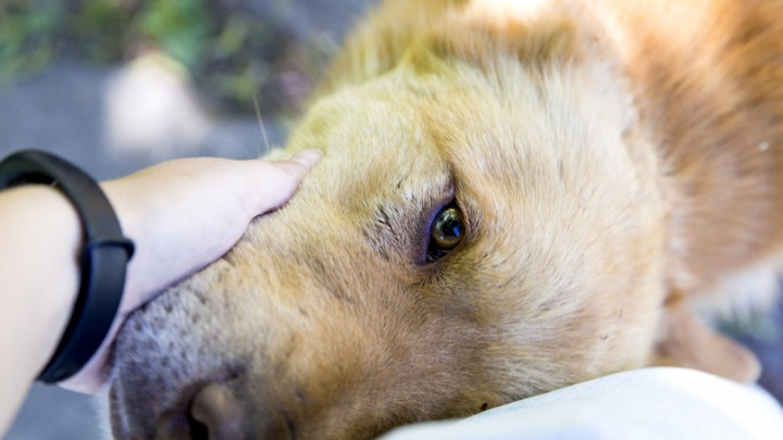 Оставила на два месяца без еды и воды: в Ярославской области женщина обрекла на смерть трёх собак