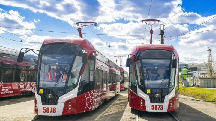 «Львята» на линии: в Перми запустили 7 новых трамваев