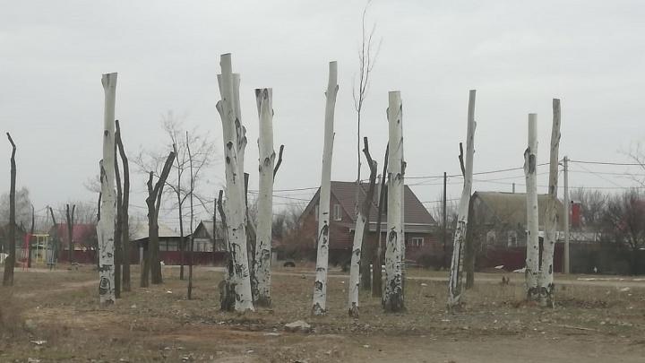 «Человеческую глупость еще никто не отменял»: Илья Варламов — о волгоградской обрезке деревьев под пень