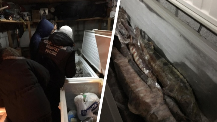 У пары сибиряков нашли 60 замороженных осетров — теперь им грозит до 8 лет