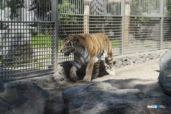 На этой неделе в зоопарк должны привезти новых животных