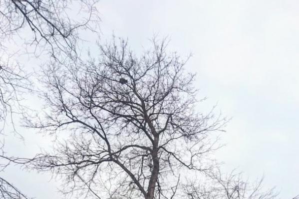Коты залезают высоко на деревья и не могут спуститься сами