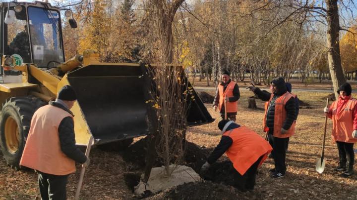 В парке Юрия Гагарина обновили тополиные аллеи