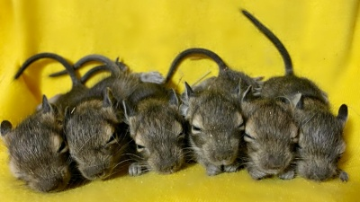Засыпают, собравшись в ряд: в нижегородском зоопарке родились малыши кустарниковых белок