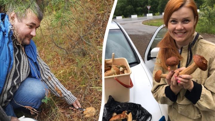 «Зашли в лес — набрали 25 ведер рыжиков»: секреты тихой охоты от грибников Красноярска