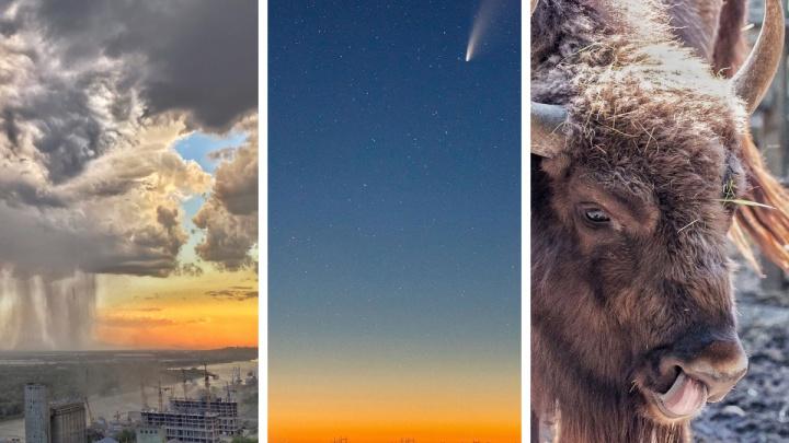 Возвращение к обычной жизни, комета NEOWISE и день рождения зубра: хорошие новости Ростова за неделю