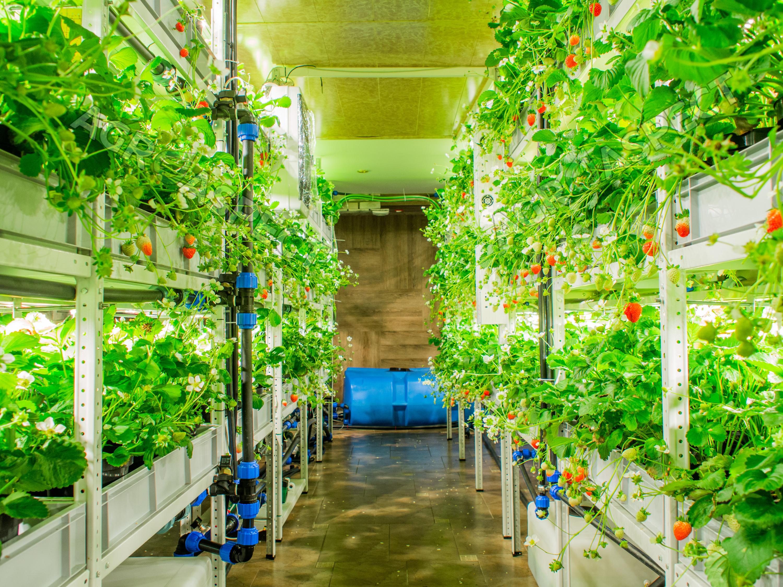 Так выглядят вертикальные фермы