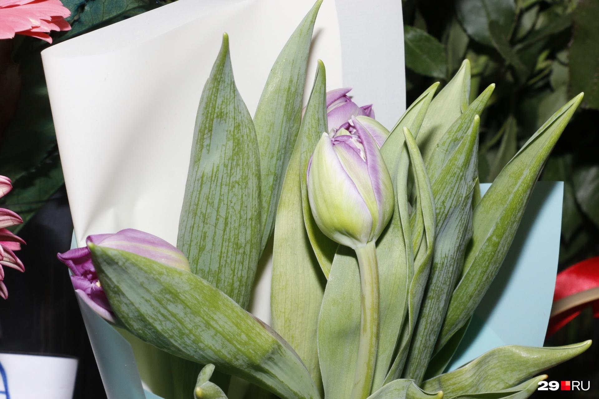 Нежно сиреневые тюльпаны — подарили бы такие своей второй половинке?