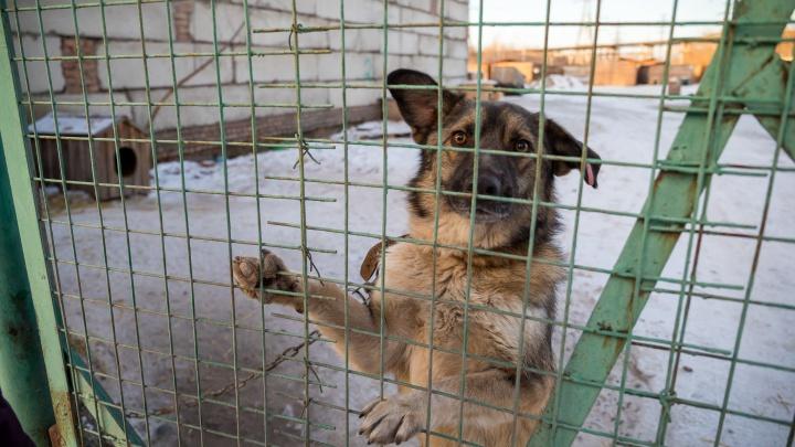 Объявлен первый контракт на отлов собак на 2021 год