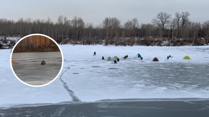 Красноярец выбрался на тонкий лед, чтобы спасти собаку
