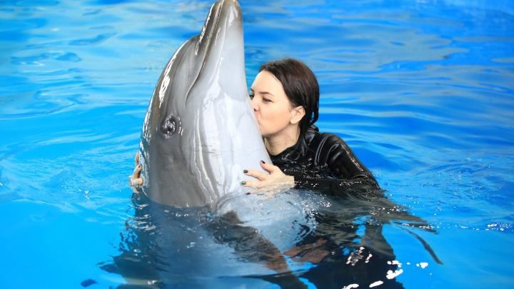 «Помогите нам!»: в ярославском дельфинарии из-за кризиса не хватает на еду животным