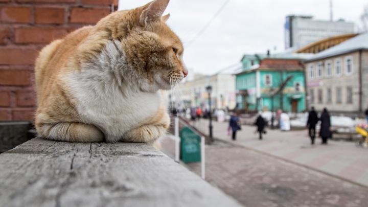 Северное УГМС: ночью и днем 23 апреля в Архангельской области сохранится сильный ветер