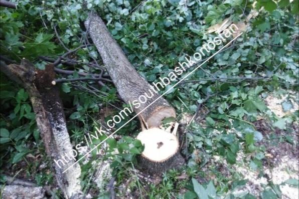 Пока неизвестно, с чем связана вырубка деревьев на шихане
