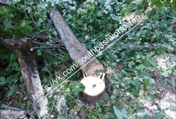 Активисты сообщили о вырубке леса у подножия шихана Куштау