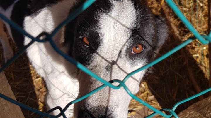Пожертвования снизились в разы: приюты для животных в Ярославской области молят о помощи