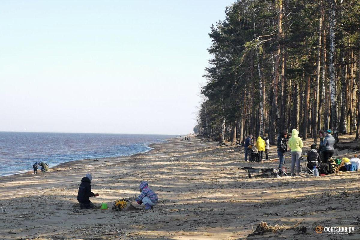 Побережье Финского залива в районе Большой Ижоры