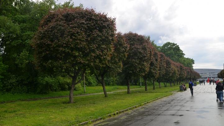 Мэр Екатеринбурга рассказал, когда откроют Зеленую Рощу
