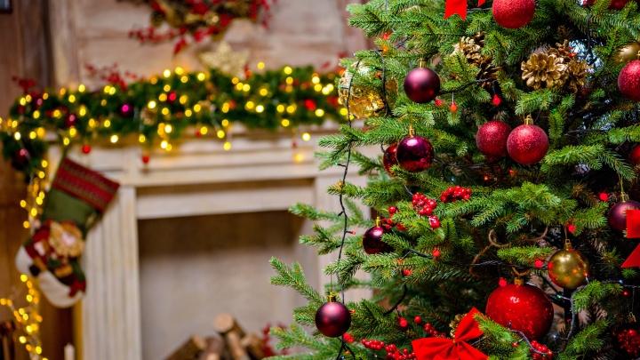 «В моде елки из пампасной травы». Как украсить дом к Новому году