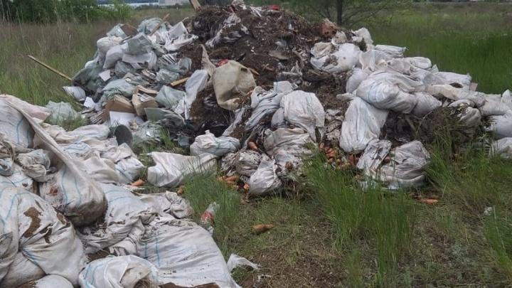 «Все овраги прочесали»: в Волгограде чиновники не смогли найти стихийную свалку гнилой моркови