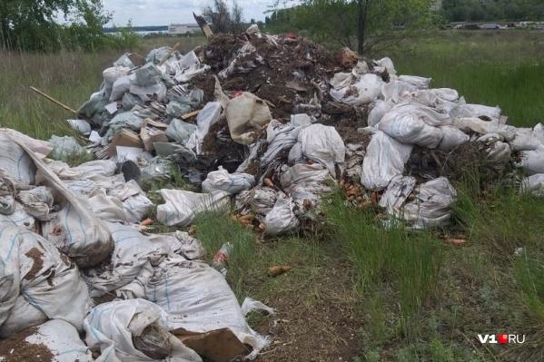 Свалку морковки обнаружили в безлюдном месте Тракторозаводского района