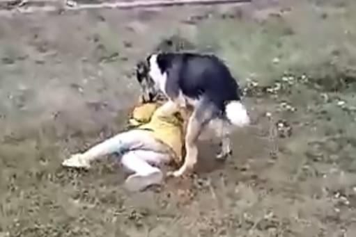 В Башкирии собака напала на ребенка, момент попал на видео