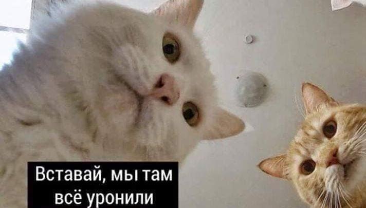 «Наташ, ты спишь?» Мемы с котами стали хроникой смутных времен