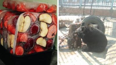 Медведи в екатеринбургском зоопарке спасаются от жары специальным мороженым: видео